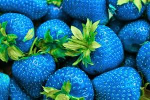 morango-azul